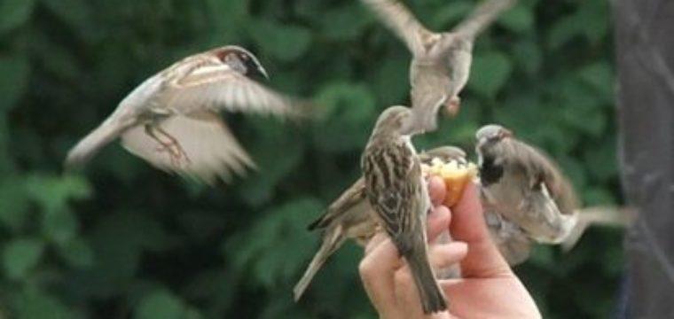 Non abbiate paura: voi valete più di molti passeri.